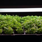 Grow Room 101. Indoor gardens.