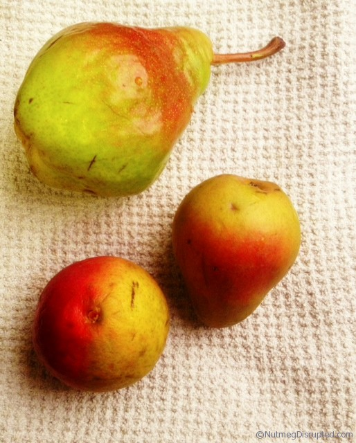 Bartlett and Seckel pears at Nutmeg Disrupted