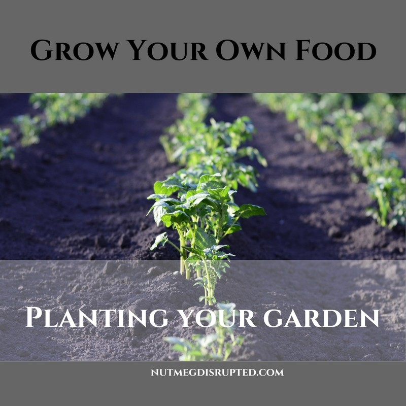 Grow Your Own Food planting Your Garden with Nutmeg Disrupted