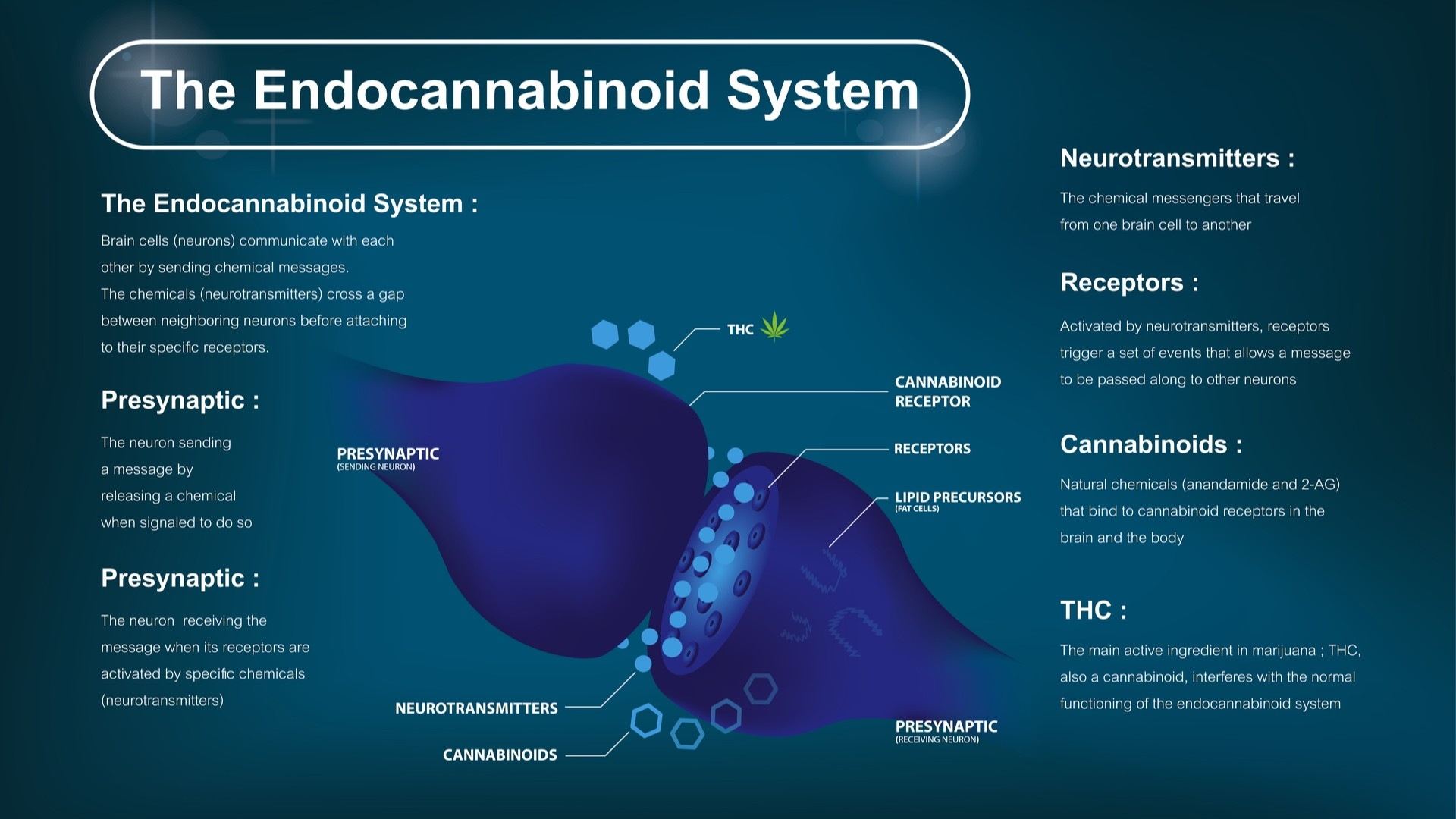 Cannabinoids and The Endocannabinoid System on Nutmeg Disrupted