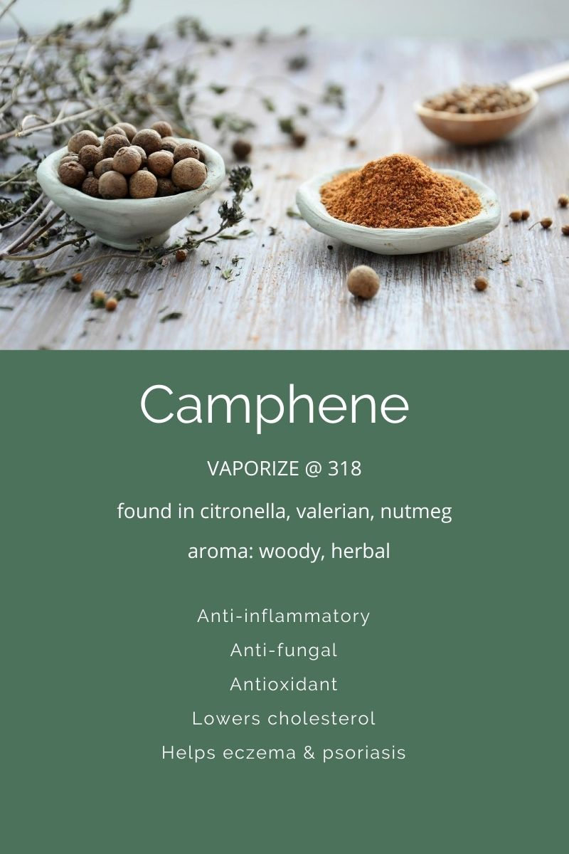 Camphene the terpene in cannabis on Nutmeg Disrupted