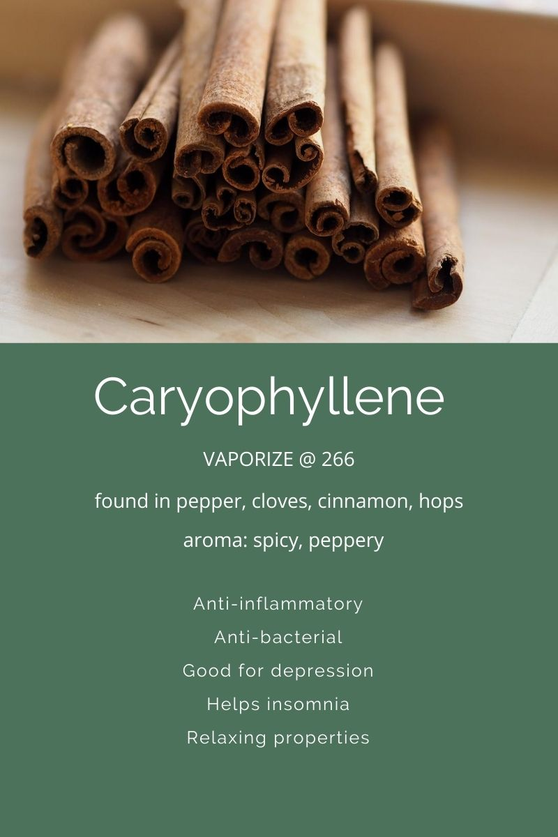 Terpenes A Closer Look At Caryophyllene