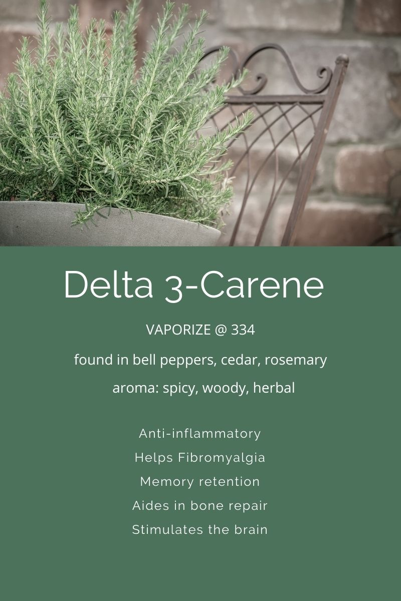 Delta 3-Carene a terpene in cannabis on Nutmeg Disrupted