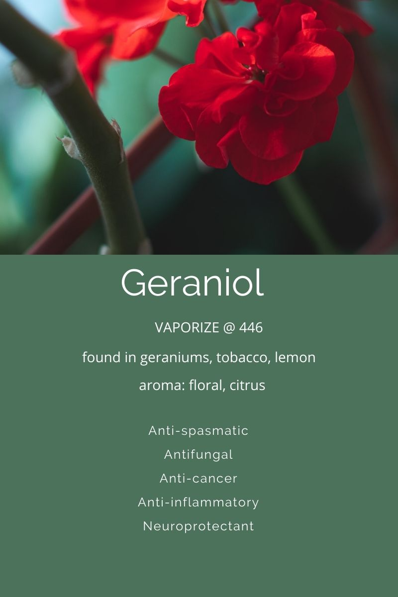 Terpenes A Closer Look at Geraniol