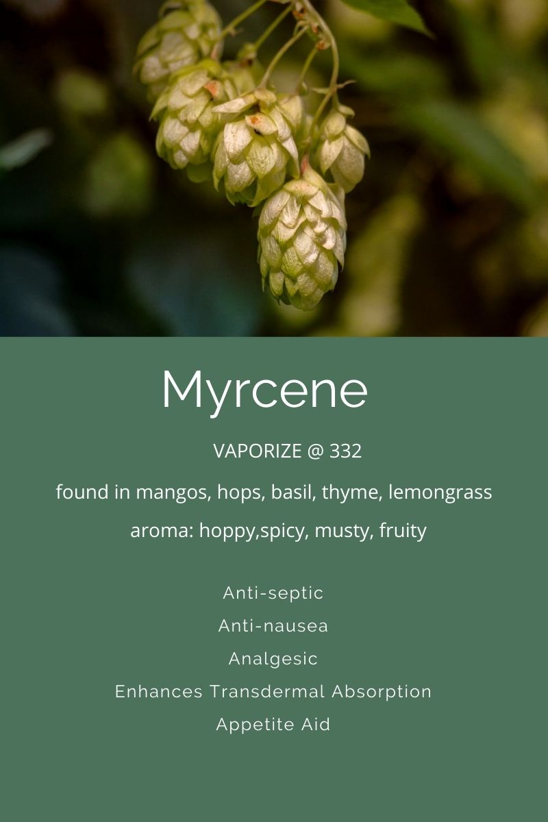Myrcene a Terpene found in cannabis on Nutmeg Disrupted