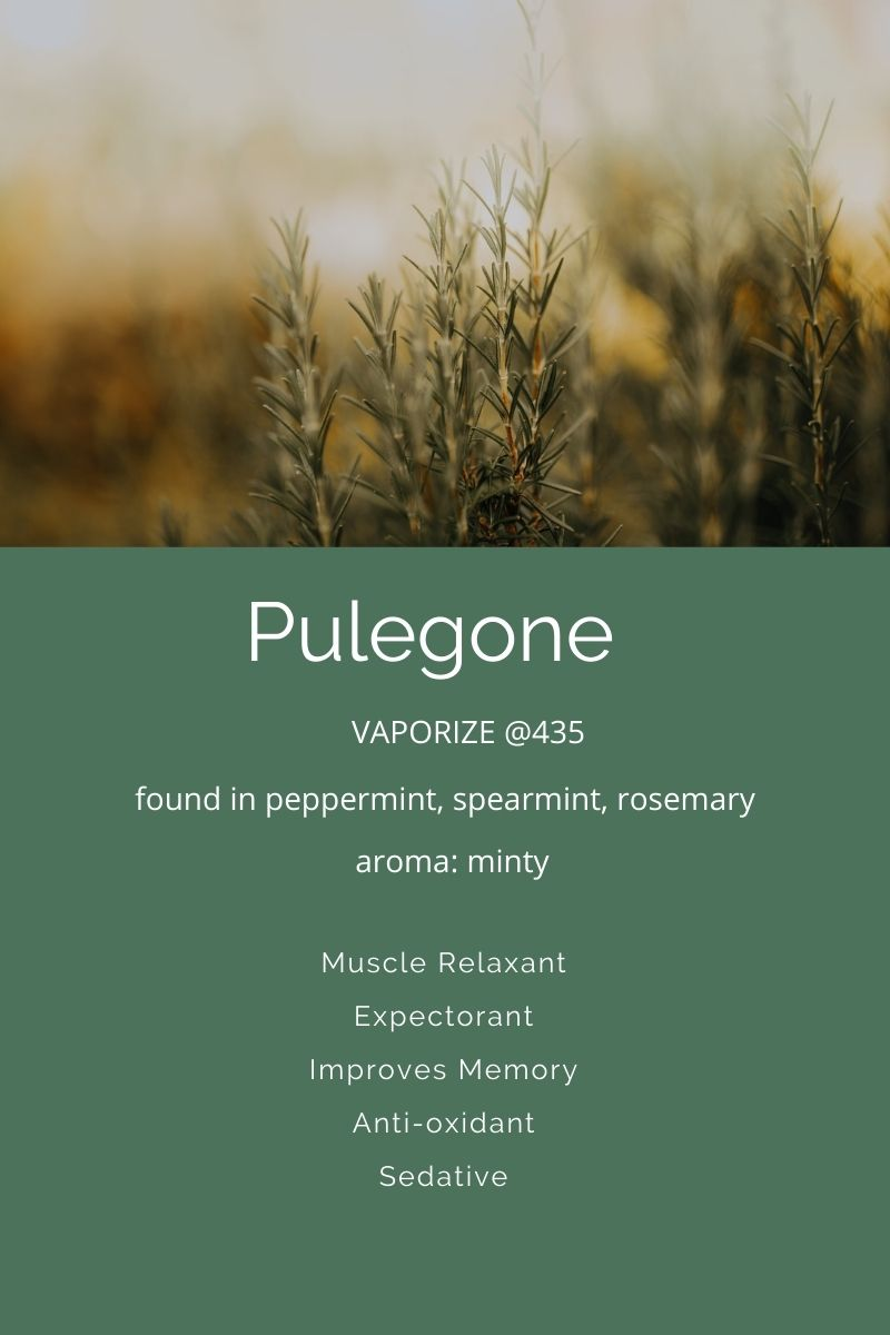 Pulegone a terpene in cannabis on Nutmeg Disrupted