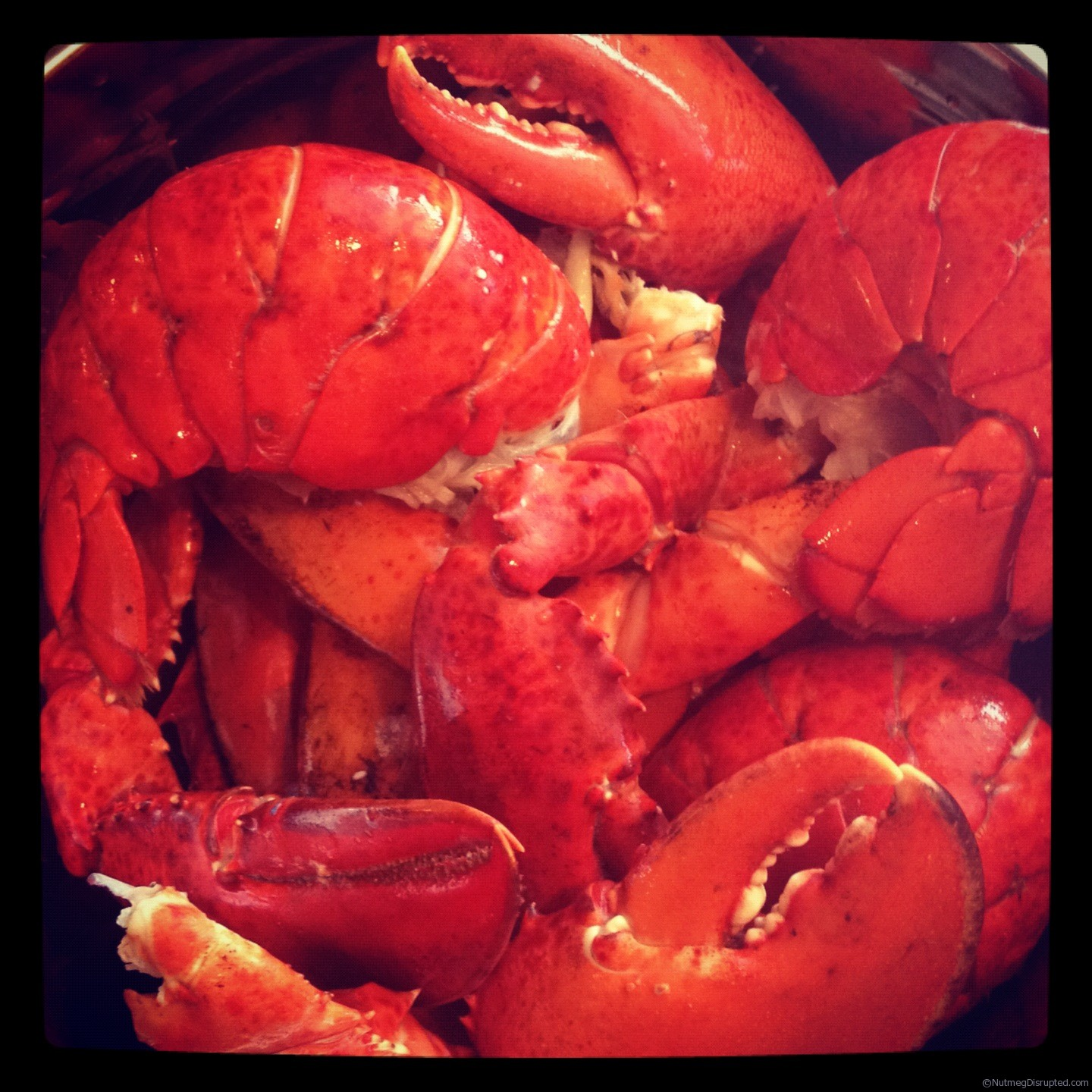 Fresh lobster boil in the Nutmeg Disrupted backyard