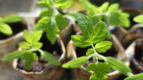 Grow Your Own Food – Starting Seeds Indoors