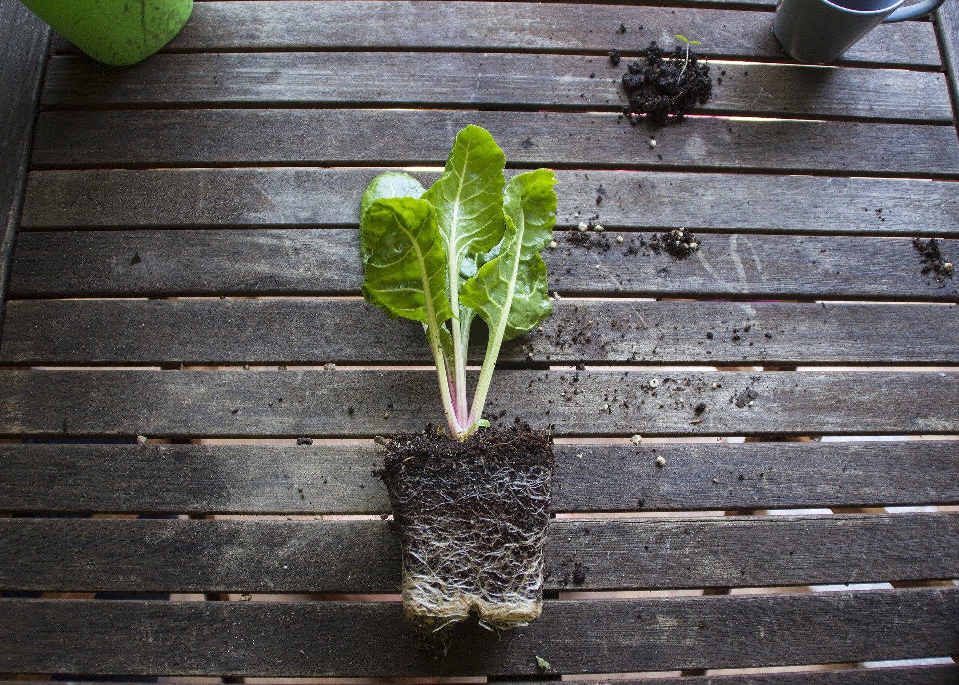 Grow Your Own Food – Planting Your Garden