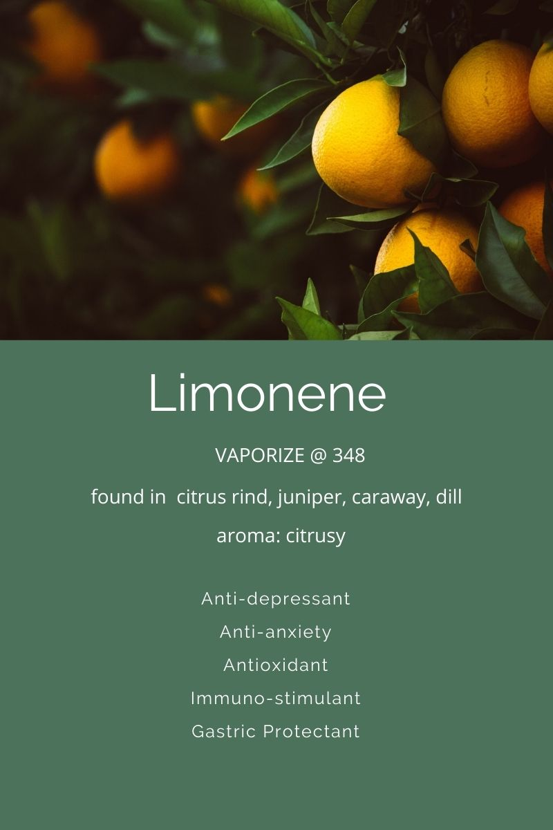 Limonene A terpene found in Cannabis on Nutmeg Disrpted