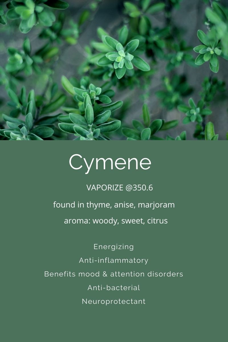 Cymene a terpene found in cannabis on Nutmeg Disrupted