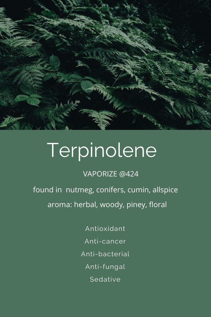 Terpinolene a terpene found in cannabis on Nutmeg Disrupted