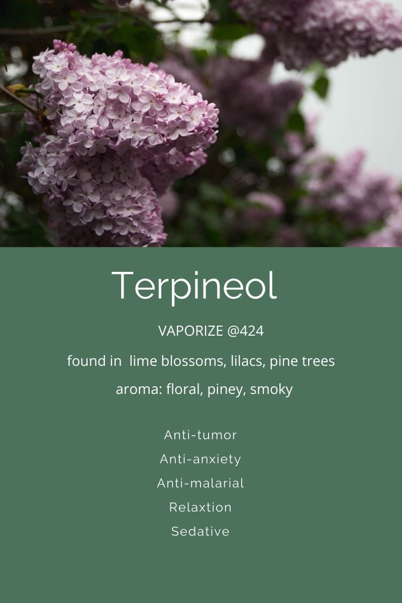 Terpineol a terpene found in cannabis on Nutmeg Disrupted