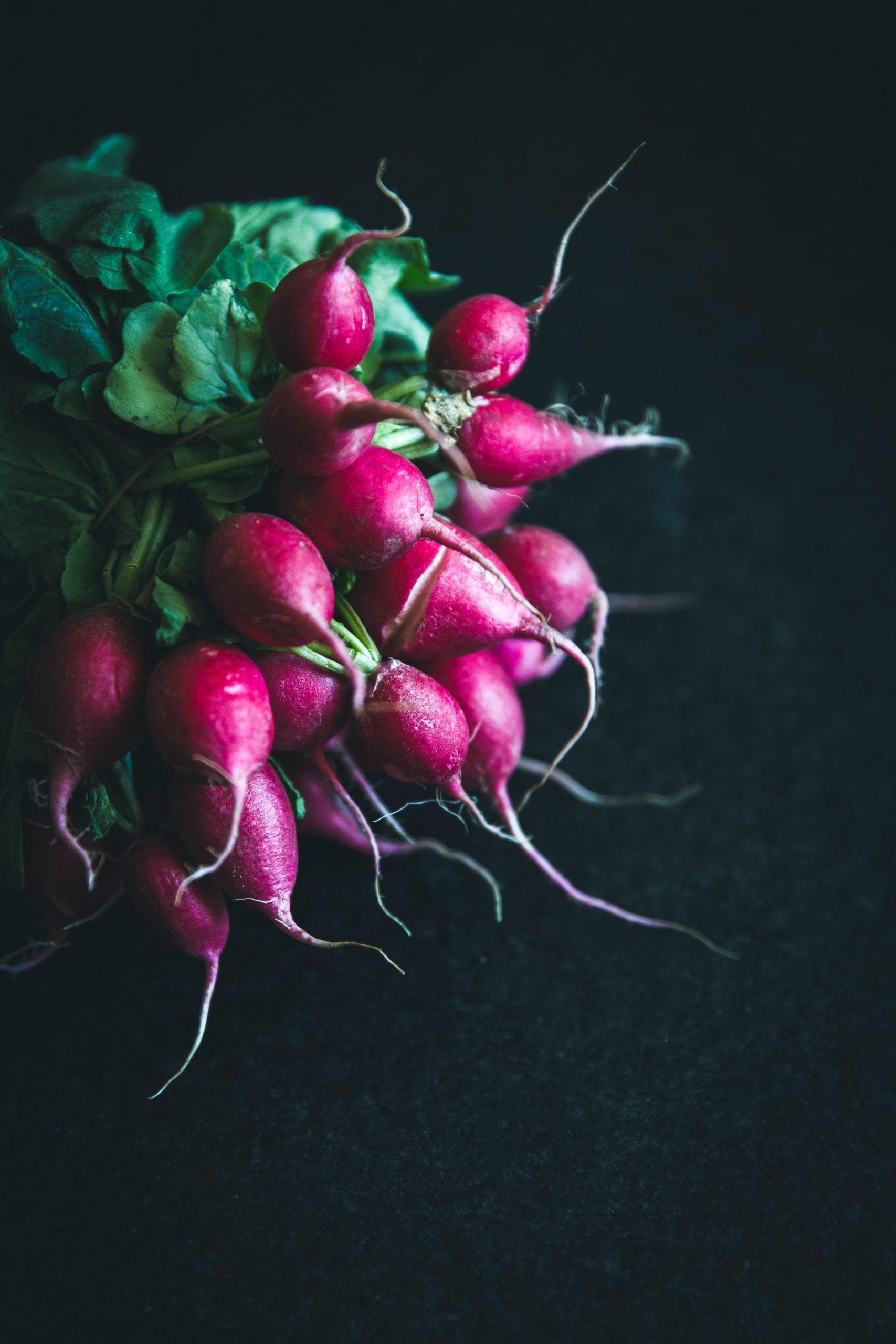 How to Grow Radishes on Nutmeg Disrupted
